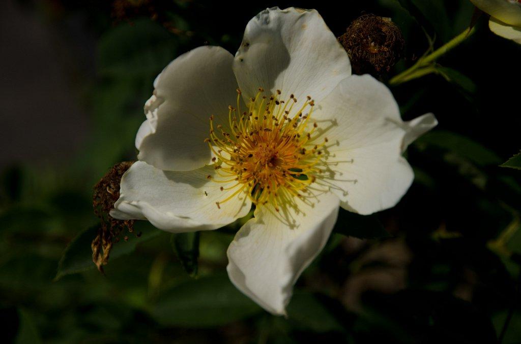 Fleurs - Vallée de la jeunesse